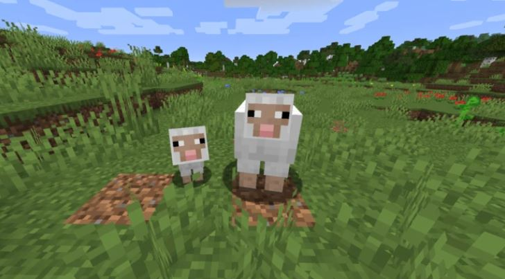 How to Breed Sheep in Minecraft